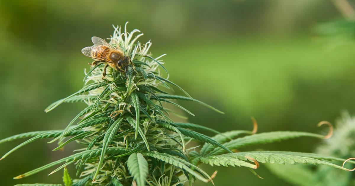 il miele prodotto dalle api