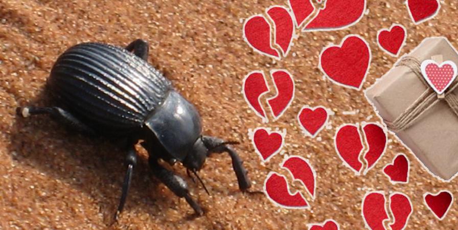 scarafaggio con il nome del partner
