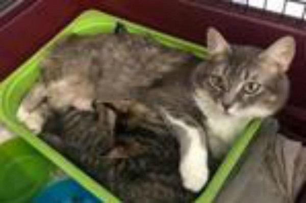 mamma gatta con il piccolo Geremia