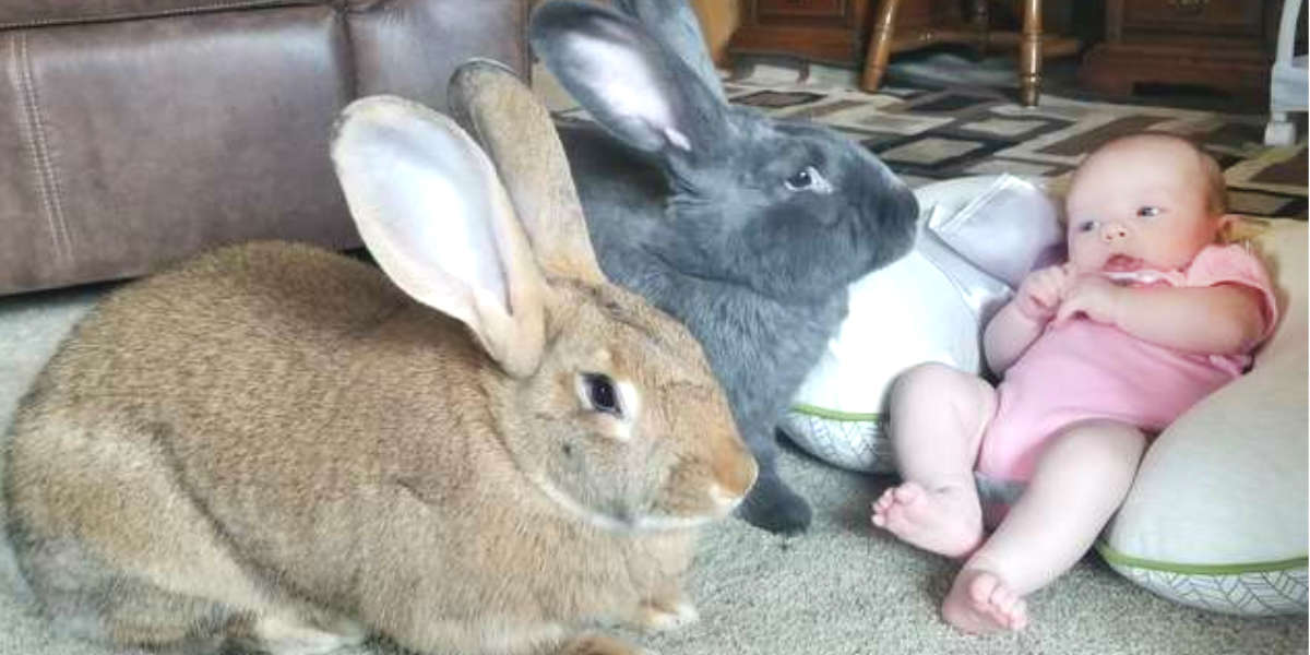 la piccola Bailey con i due conigli domestici