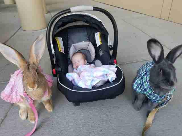 i conigli giganti insieme alla neonata