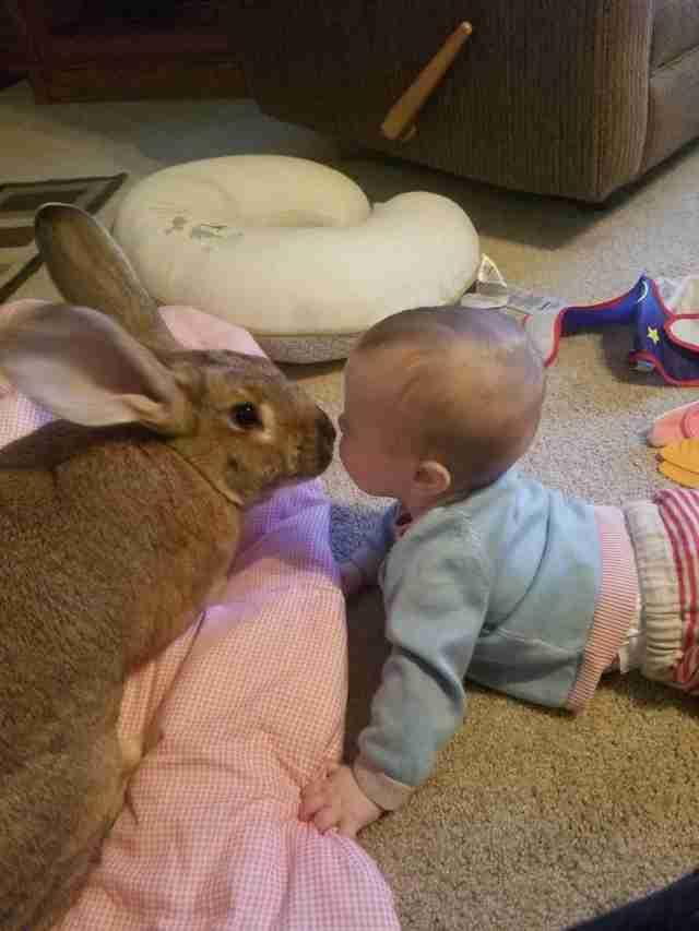 faccia a faccia tra neonata e coniglio