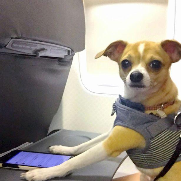 cane salvato gira il mondo