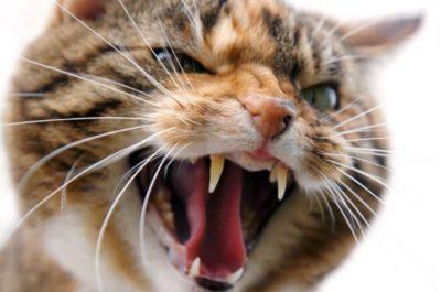 gatto contro i proprietari