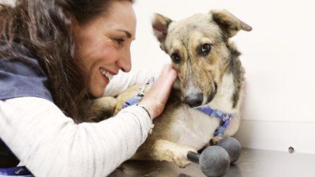 piedino, primo cane con arti in titanio