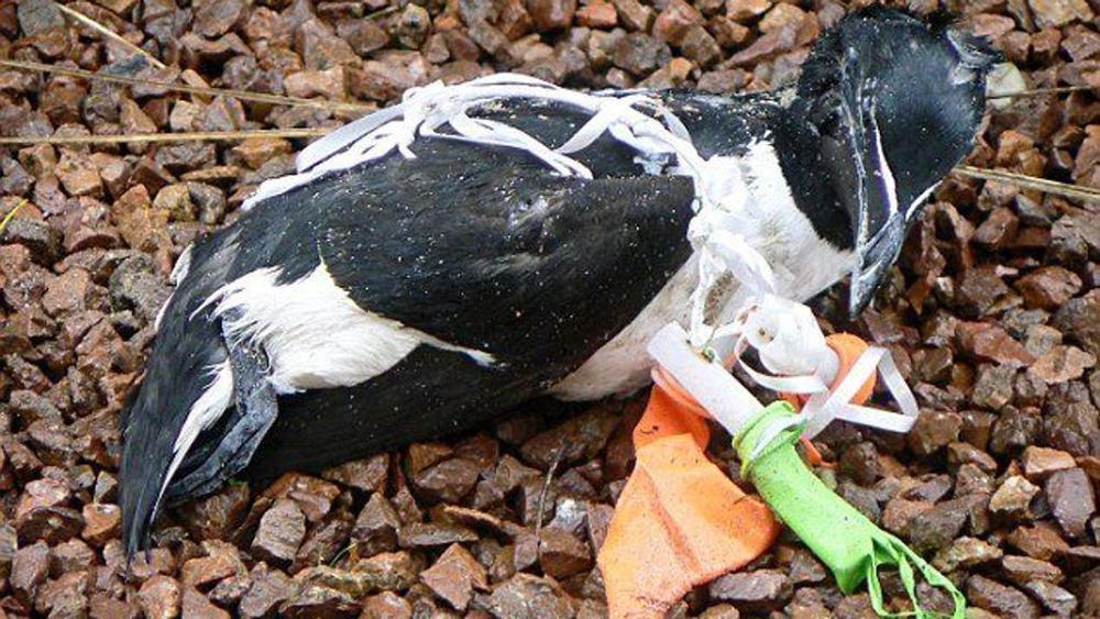 animali a rischio per i palloncini di plastica