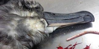 palloncini di plastica letali per gli uccelli