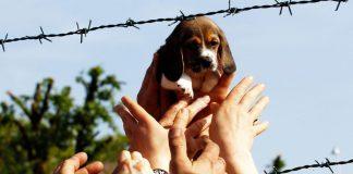 E' morta Vita, il cane simbolo della libertà contro la vivisezione